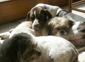 LinChi and Olive Hugs and Doggie Meditation